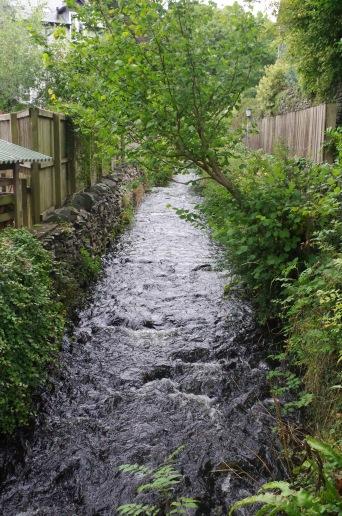 The Local Stream