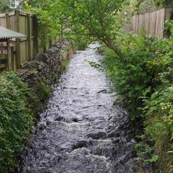 The Local Stream